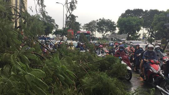Gió quật ngã cây xanh ở Công trường Mê Linh, đè bị thương 2 người-2