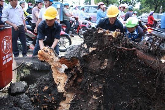 Gió quật ngã cây xanh ở Công trường Mê Linh, đè bị thương 2 người-4