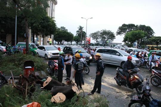 Gió quật ngã cây xanh ở Công trường Mê Linh, đè bị thương 2 người-5