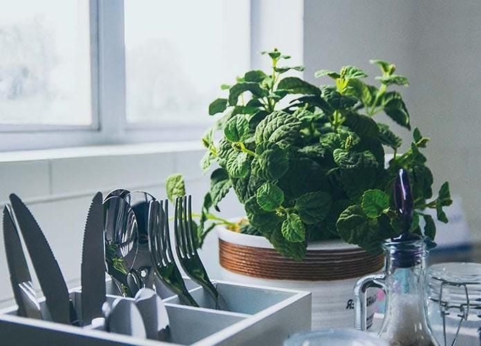 Chọn loại cây trồng phù hợp với từng căn phòng trong gia đình bạn mang lại phúc khí dồi dào-2