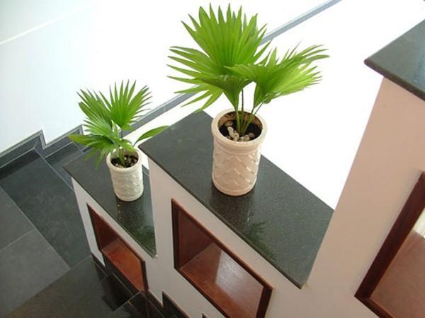 Chọn loại cây trồng phù hợp với từng căn phòng trong gia đình bạn mang lại phúc khí dồi dào-3