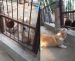 Clip hài hước không tưởng: Bất ngờ bị đuổi, thanh niên say rượu đứng cãi nhau tay đôi với chó gần 30 phút-1