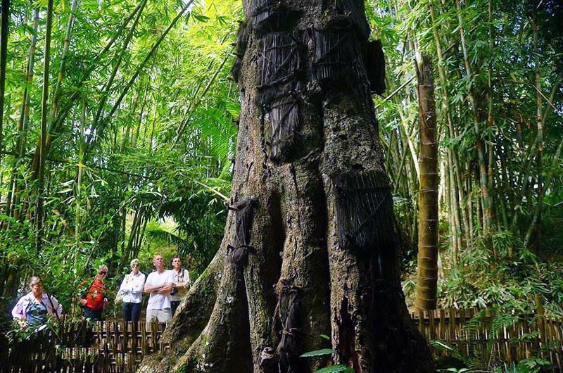 Những tập tục kỳ dị chỉ có ở Indonesia-8