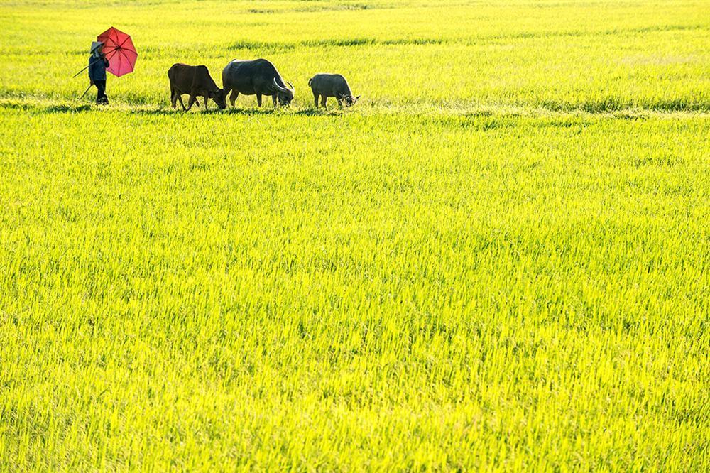 Nghỉ lễ Quốc khánh, về Ninh Bình trải nghiệm cuộc sống mộc mạc-3