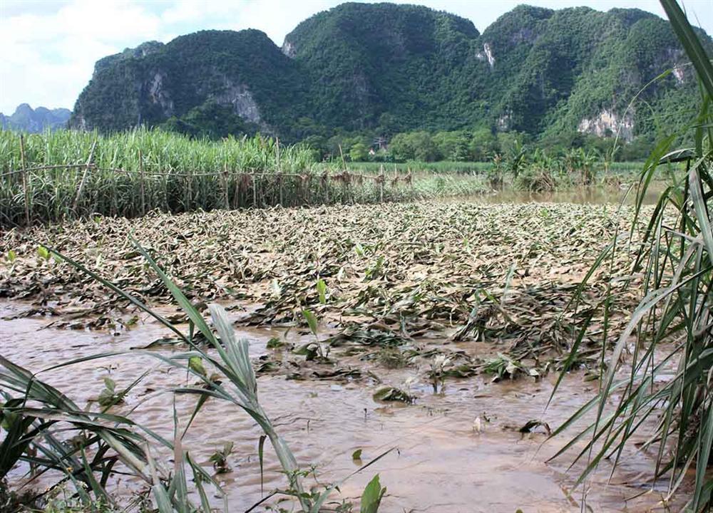 Nghệ An: Lũ chồng lũ, nhiều nơi vẫn ngập trong biển nước-13