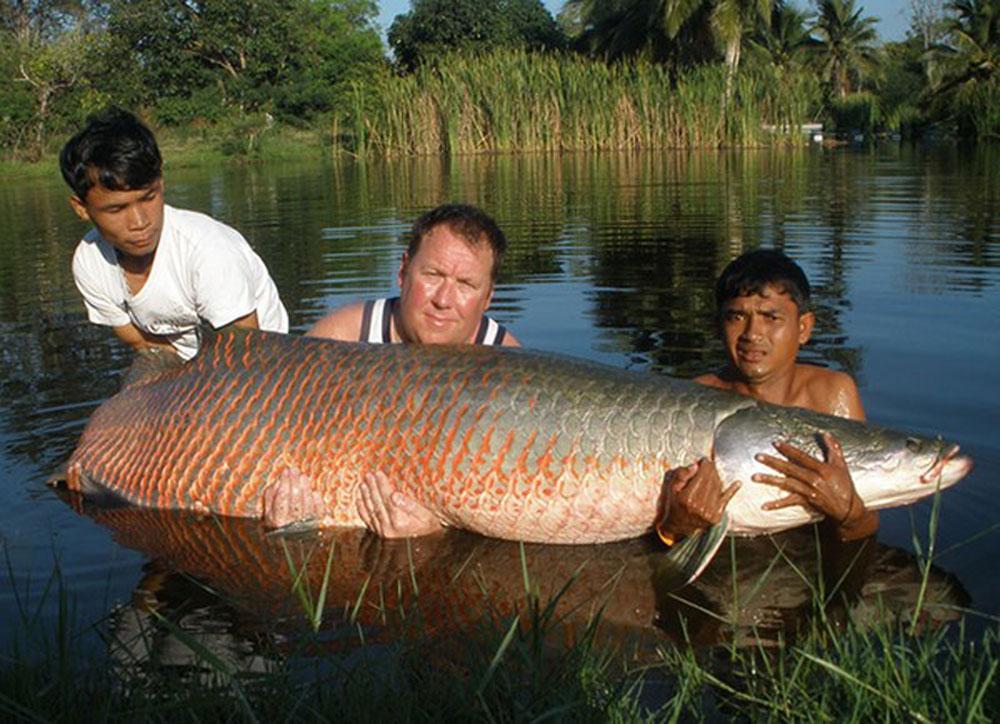 Đại gia Việt săn thủy quái lớn nhất thế giới về thả ao chơi vui-4