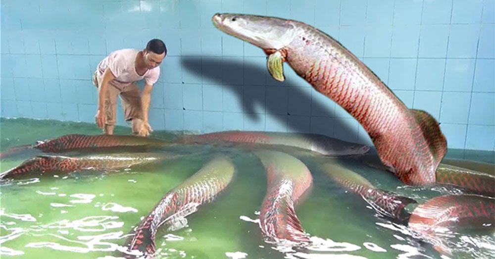 Đại gia Việt săn thủy quái lớn nhất thế giới về thả ao chơi vui-5