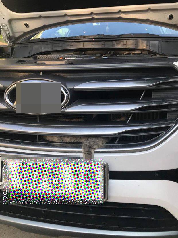 Chú mèo ưa mạo hiểm chui vào đầu xe ô tô phượt 0 đồng từ Yên Bái lên Lào Cai-1