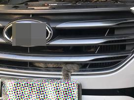 Chú mèo ưa mạo hiểm chui vào đầu xe ô tô phượt 0 đồng từ Yên Bái lên Lào Cai