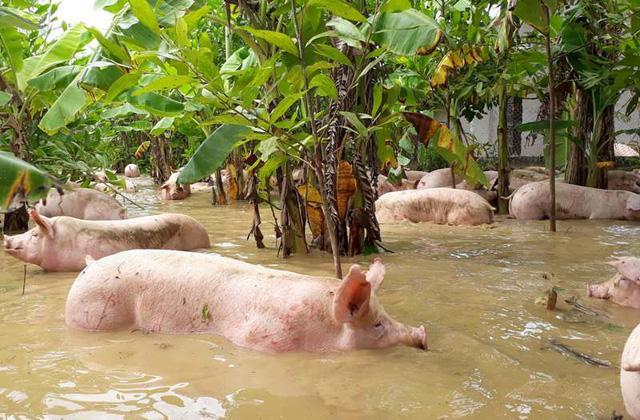 Thanh Hóa: 13 người chết, mất tích do mưa lũ-3