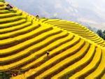 Top 14 địa điểm du lịch đẹp và hấp dẫn nhất Việt Nam bạn nên 'check-in' 1 lần trong đời