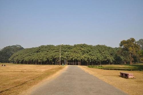 Cận cảnh cây đa khổng lồ nhất thế giới: Tán cây bao phủ hơn 14 nghìn mét vuông-1