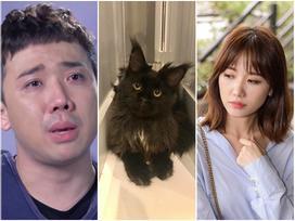 Không nỡ 'giết' Hari Won, Trấn Thành đau khổ ngắm ảnh mèo cưng 3000 USD trước khi bị cạo lông