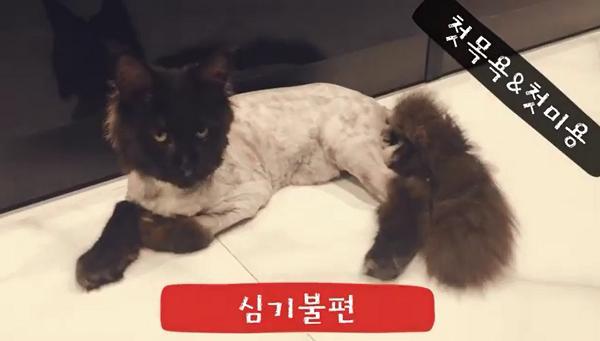 Sau khi cạo trụi lông mèo cưng 3.000 USD, Hari Won quay clip khoe nó ok lắm dù Trấn Thành uất ức khóc không ra tiếng-5