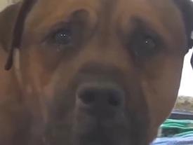 Clip cảm động: Chú chó khóc trong tuyệt vọng khi nhận ra mình bị bỏ rơi gây sốt cộng đồng mạng