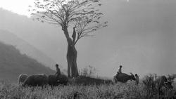 Vẻ đẹp thuần khiết, đầy cảm xúc của Đồng Văn qua ảnh đen trắng