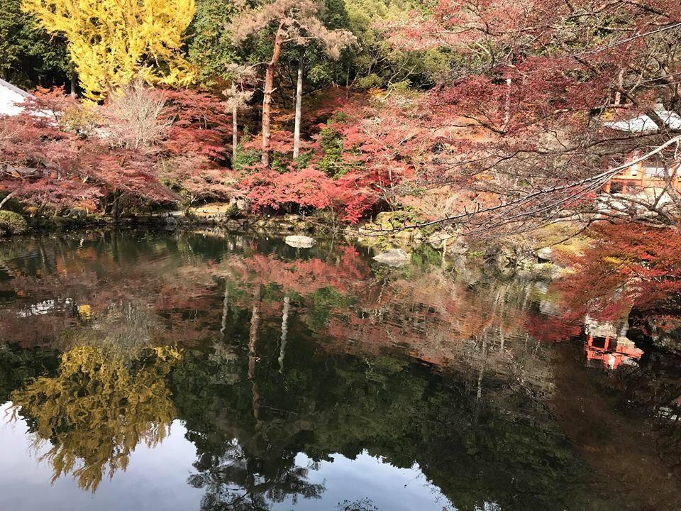 Mùa thu lá đỏ ở Nhật Bản đẹp đến ngẩn ngơ lòng người-2
