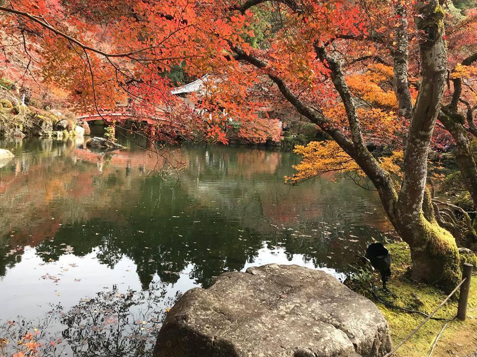 Mùa thu lá đỏ ở Nhật Bản đẹp đến ngẩn ngơ lòng người-4