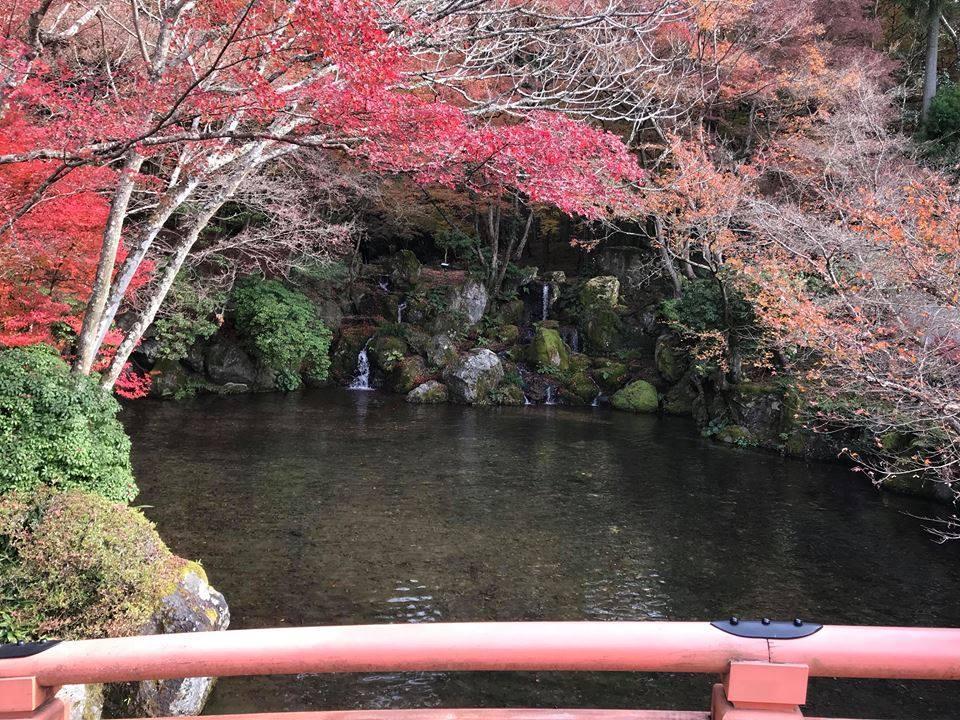 Mùa thu lá đỏ ở Nhật Bản đẹp đến ngẩn ngơ lòng người-3