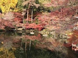 Mùa thu lá đỏ ở Nhật Bản đẹp làm ngẩn ngơ lòng người