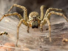 Hy Lạp: Ngỡ ngàng cảnh nhện 'mở tiệc hoan lạc' kéo dài 300m bờ biển