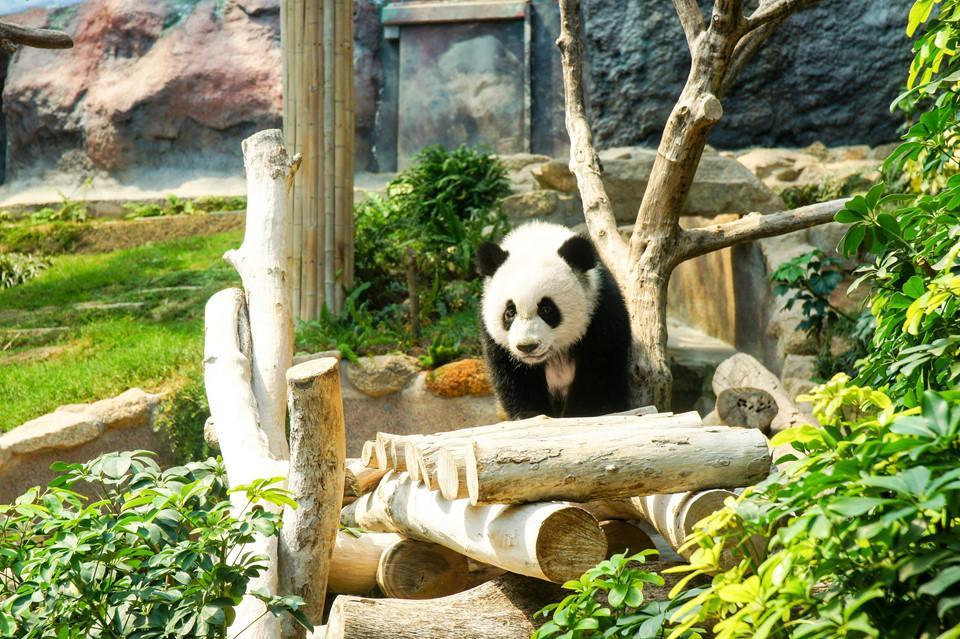10 trải nghiệm du lịch không thể bỏ qua khi đến Macau-7