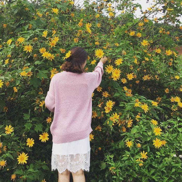Tháng 10 rồi rủ bạn thân đến Ba Vì để ngắm hoa dã quỳ thôi-3