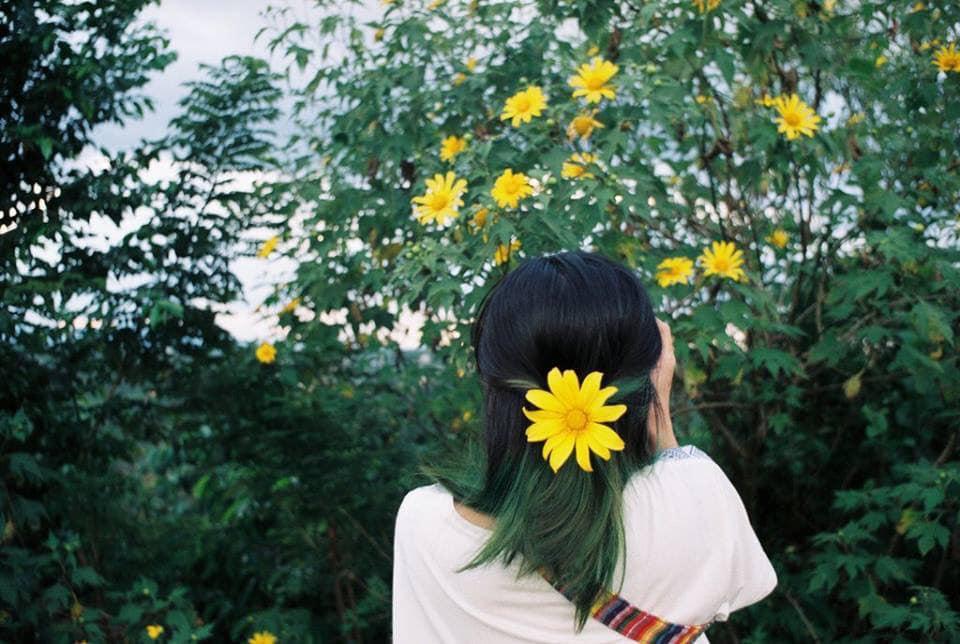 Tháng 10 rồi rủ bạn thân đến Ba Vì để ngắm hoa dã quỳ thôi-4