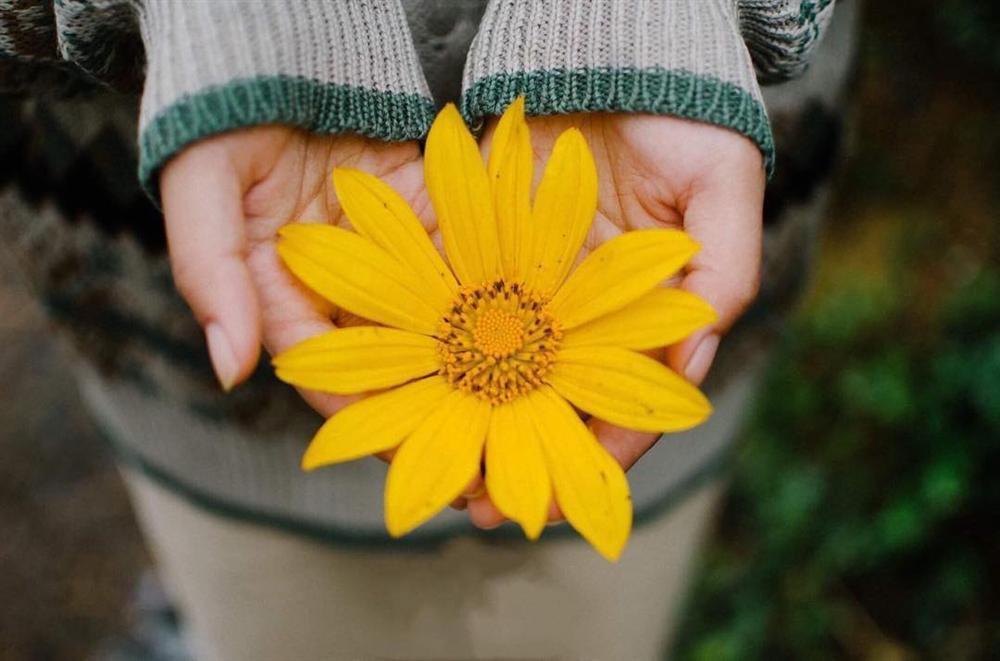 Tháng 10 rồi rủ bạn thân đến Ba Vì để ngắm hoa dã quỳ thôi-5