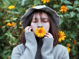 Tháng 10 rồi rủ bạn thân đến Ba Vì để ngắm hoa dã quỳ thôi