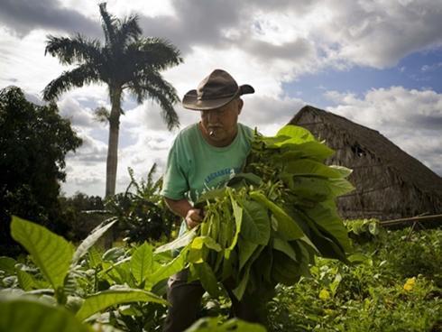 Đến Cuba, khám phá khu Havana cổ sống động hơn 400 năm tuổi-1
