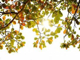 Dự báo thời tiết 7/10: Hà Nội ngày nắng, sáng sớm có sương mù