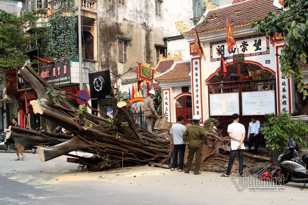 Hà Nội: Cây đa trước đền cổ đổ gục, đường ống dây cáp lộ thiên-4