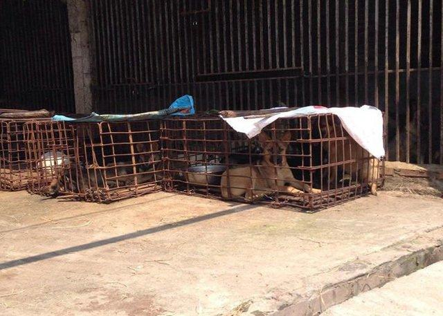 Biến động lớn ở làng giết chó lớn nhất nhì Bắc Bộ-2