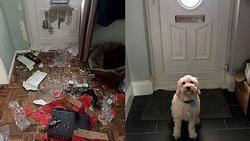 Chú chó phá nát căn nhà, chủ nhân chi 46 triệu đồng sửa chữa vẫn không trách nửa lời