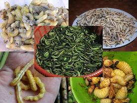 Sâu béo nhung nhúc: Đặc sản kinh hoàng, dân Việt nhậu lai rai