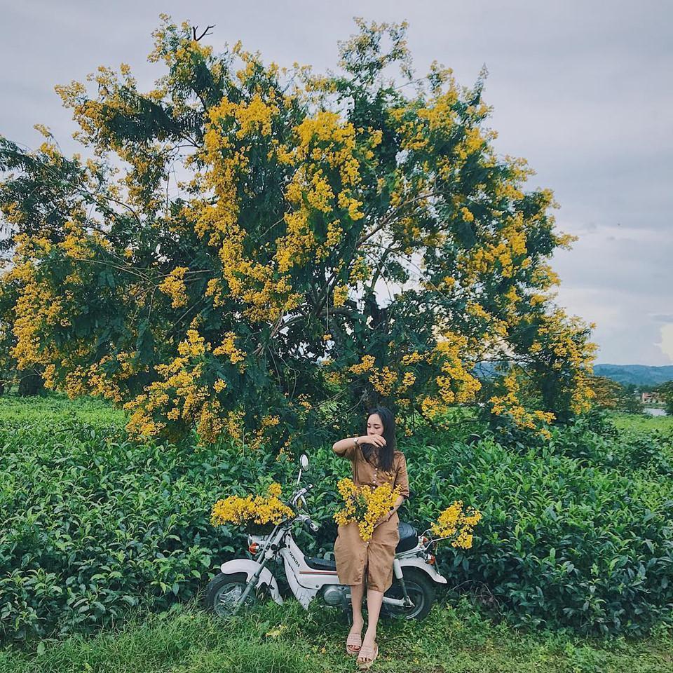 Đến Gia Lai ngất ngây trước rừng hoa muồng vàng rực-5