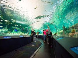 Du khách khỏa thân 'đại náo' hồ chứa đầy cá mập