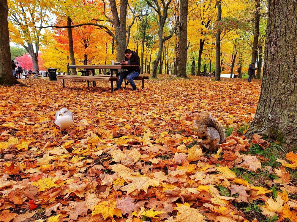 Say đắm vẻ đẹp Paris giữa vùng trời Bắc Mỹ mùa thay lá-3
