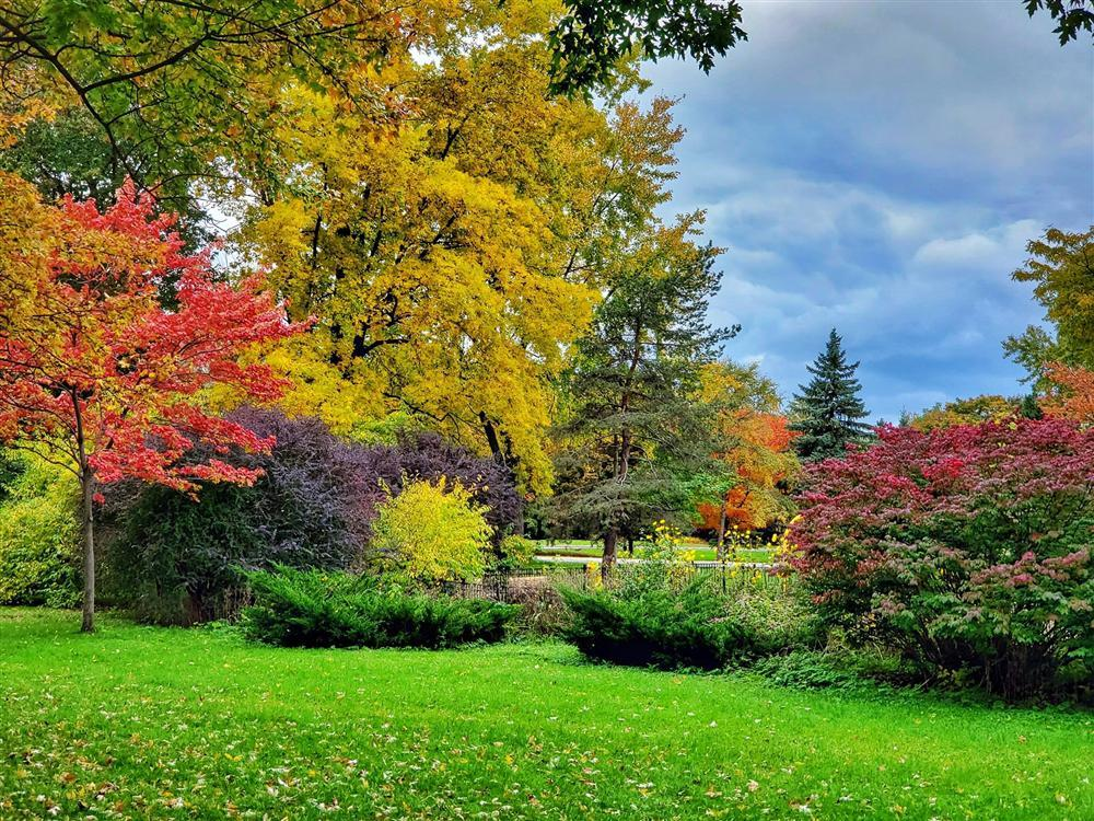 Say đắm vẻ đẹp Paris giữa vùng trời Bắc Mỹ mùa thay lá-7