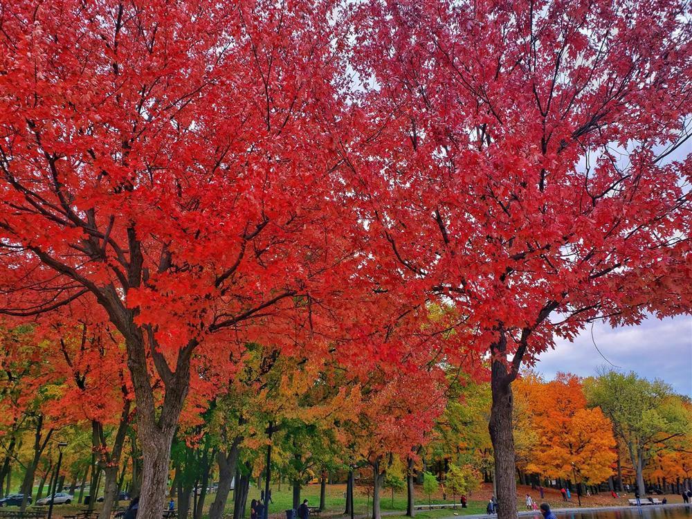 Say đắm vẻ đẹp Paris giữa vùng trời Bắc Mỹ mùa thay lá-8