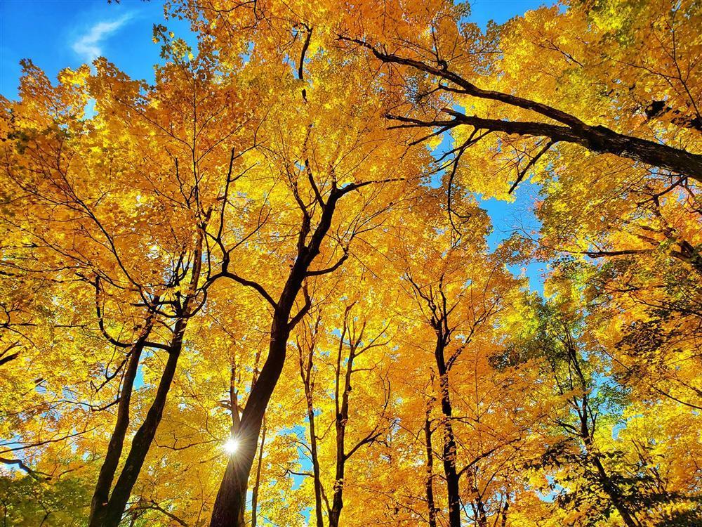 Say đắm vẻ đẹp Paris giữa vùng trời Bắc Mỹ mùa thay lá-9