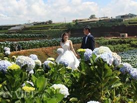 Giới trẻ đua nhau check-in cánh đồng hoa cẩm tú cầu đẹp mê mẩn ở Đà Lạt