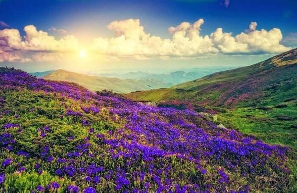 Thung lũng ngập màu tím biếc của sắc hoa 12 năm nở một lần-1