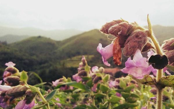 Thung lũng ngập màu tím biếc của sắc hoa 12 năm nở một lần-4