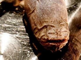 Đào móng nhà bắt được cá 'quái dị', mặt tinh tinh, nhiều răng nhọn