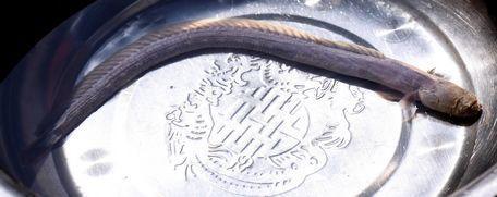 Đào móng nhà bắt được cá quái dị, mặt tinh tinh, nhiều răng nhọn-2
