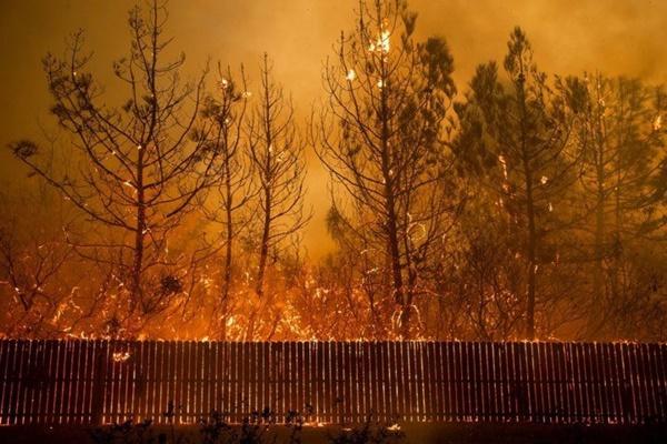 Cháy rừng dữ dội ở Mỹ, 25 người thiệt mạng-10