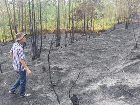 Cháy rừng dữ dội ở Mỹ, 25 người thiệt mạng-11