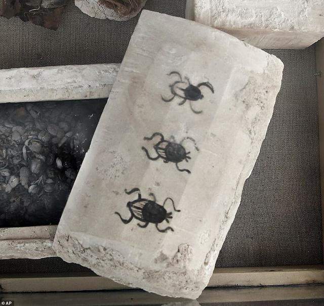 Phát hiện hàng chục xác ướp lạ trong ngôi mộ cổ 6.000 năm tuổi-4